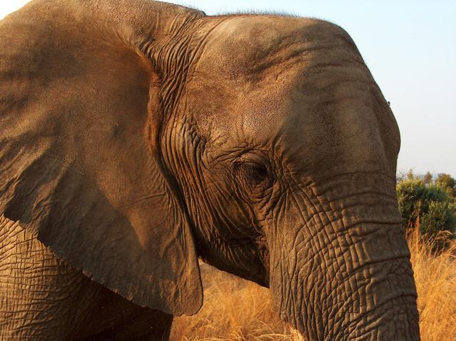 african-elephants-1399045-639x478